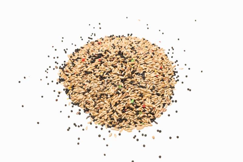 鸟混杂的种子 免版税库存照片