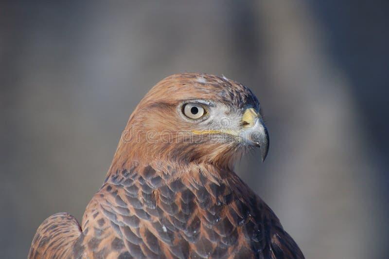 鸟牺牲者 免版税库存照片
