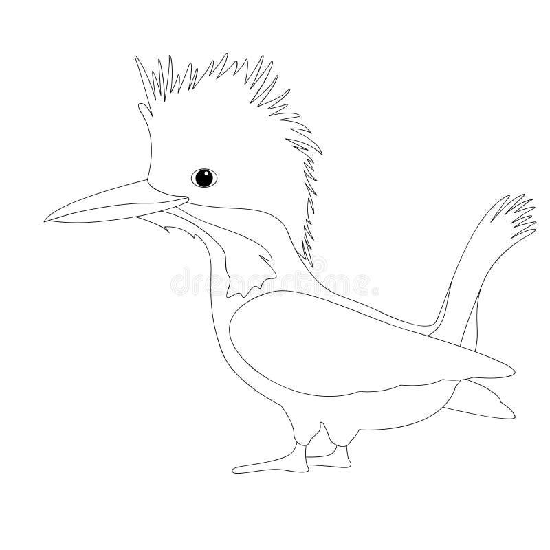 鸟男性有顶饰翠鸟传染媒介例证着色 向量例证
