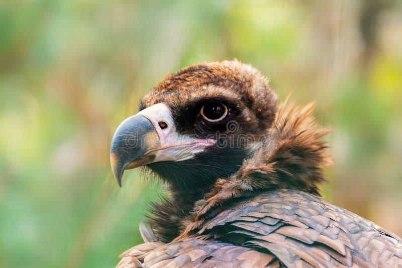 鸟画象,雕,野生生物 库存照片