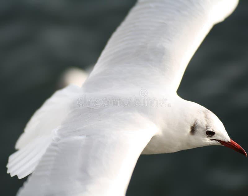 鸟白色 库存照片