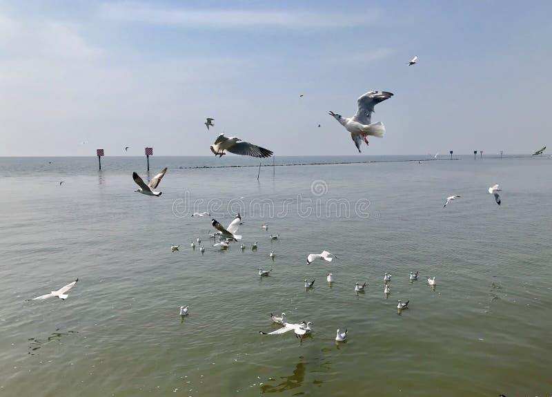 鸟的季节 免版税库存照片