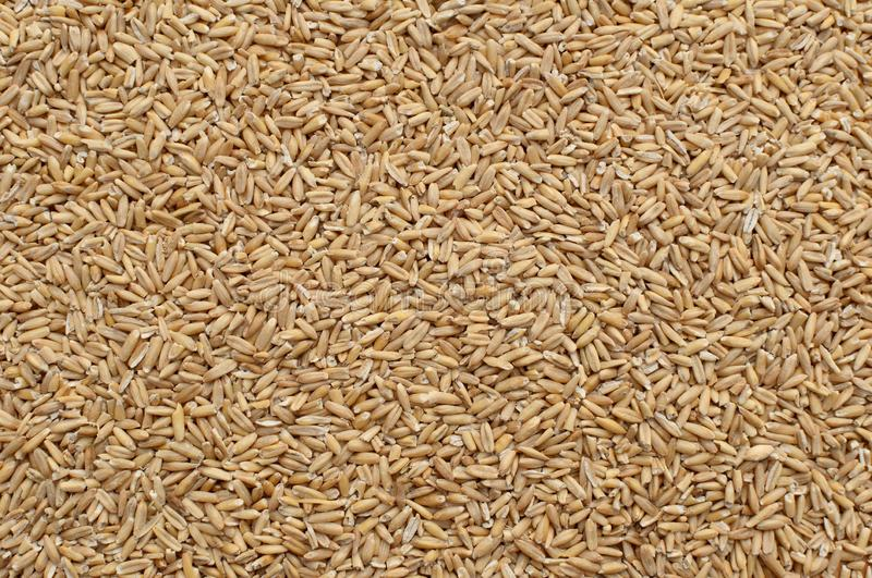 鸟的宠物食品 所有燕麦五谷在木背景中 ?? 库存图片