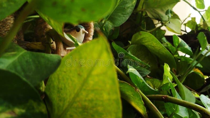 鸟的巢特写镜头以绿色 与巢的人为鸟在森林里 库存图片