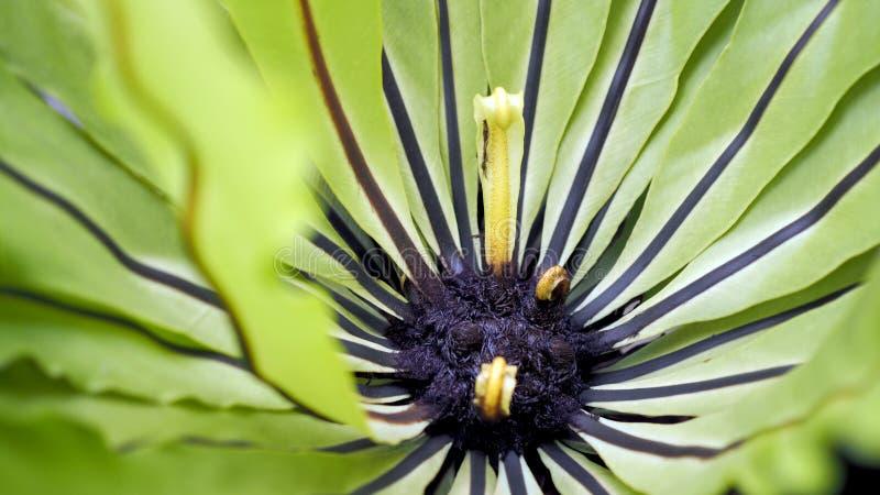 鸟的巢蕨 美丽的圈子鸟的巢蕨离开接近  免版税库存照片