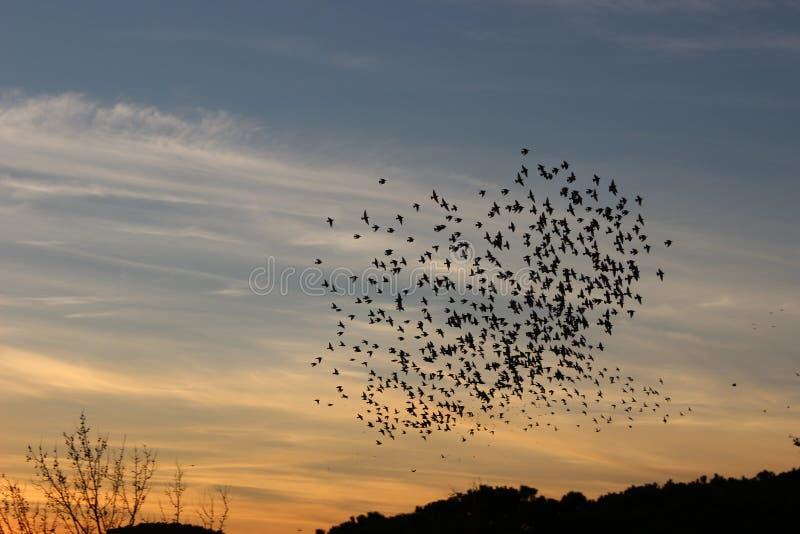 鸟的心脏 免版税库存图片