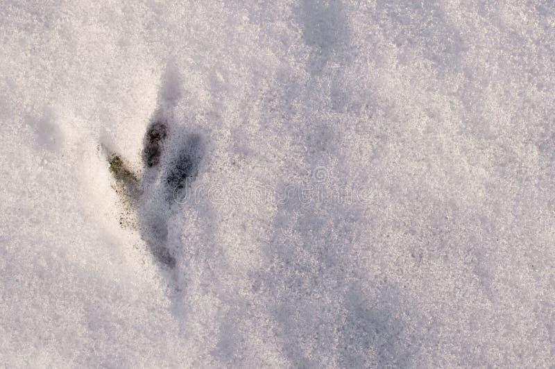 鸟的新鲜的轨道在白色雪,顶视图的 免版税库存图片