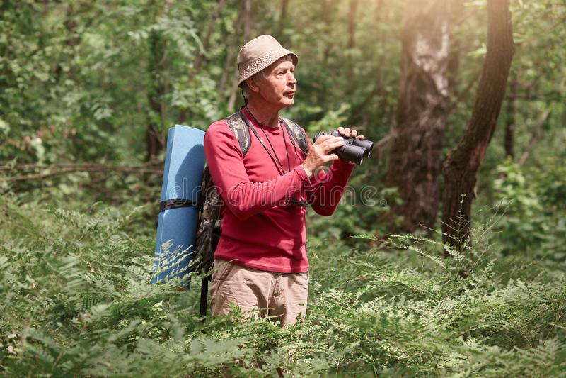 鸟的监视人年长的人,当站立户外在森林里,扫描他的与双筒望远镜的周围,男性穿戴了偶然红色时 免版税库存照片