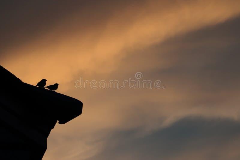 鸟的阴影在屋顶的 图库摄影