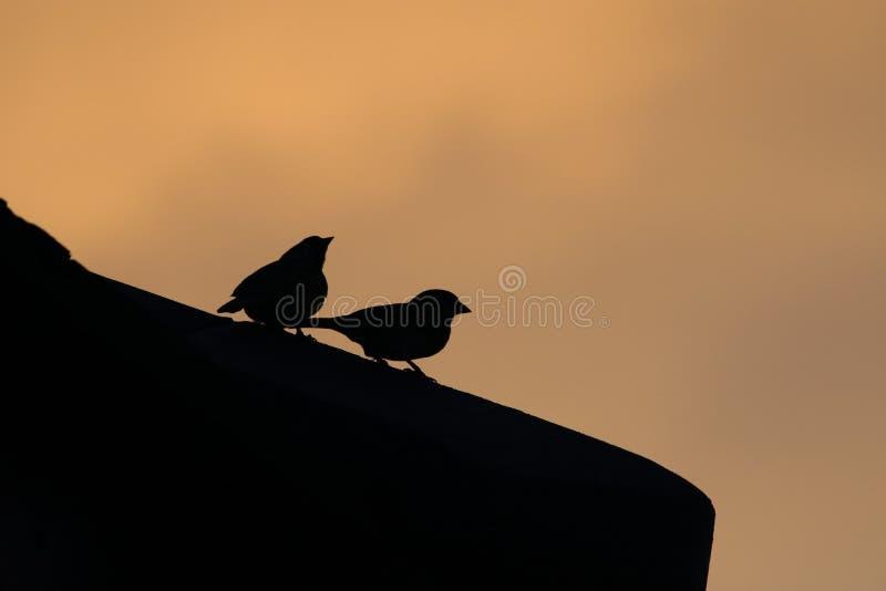 鸟的阴影在屋顶的 库存照片