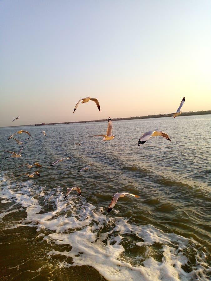 鸟看见船给动物喝水 免版税库存照片