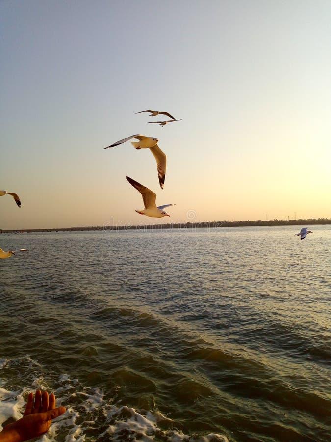 鸟看见船给动物喝水 免版税图库摄影