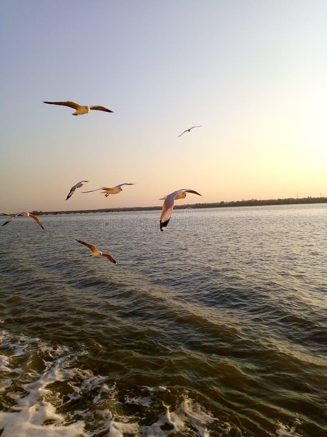 鸟看见船给动物喝水 库存图片