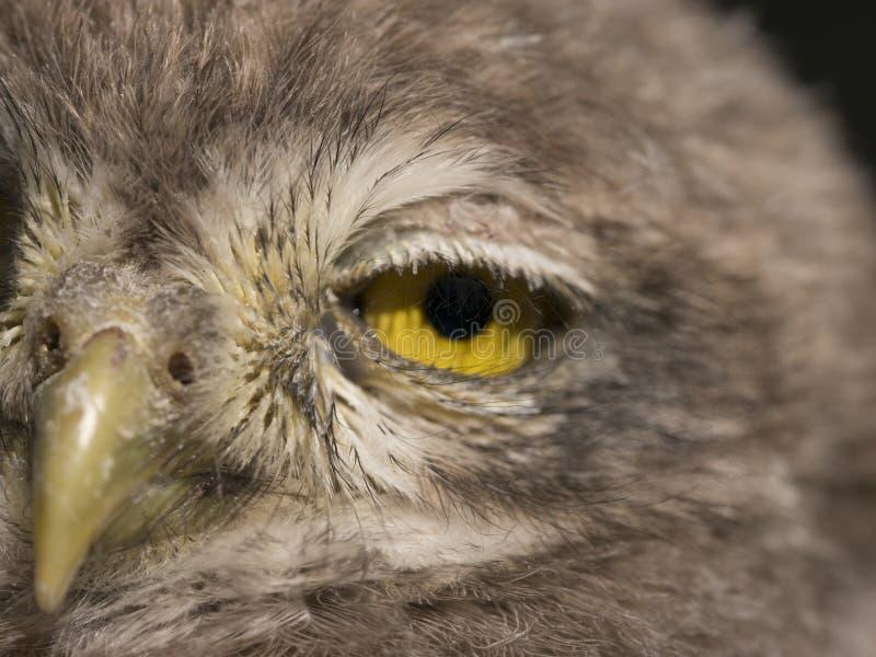 鸟眼睛 库存照片