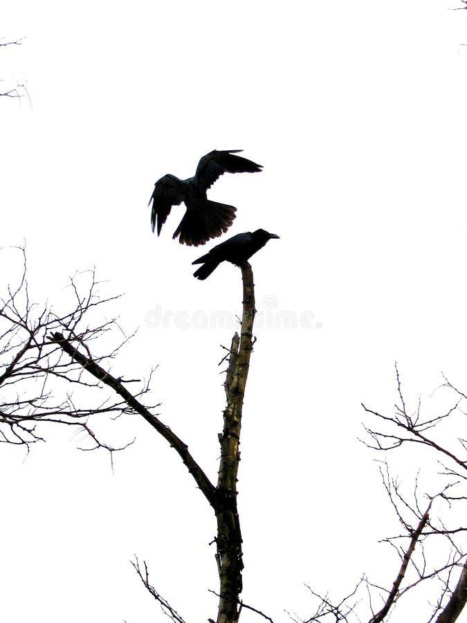 鸟着陆 图库摄影