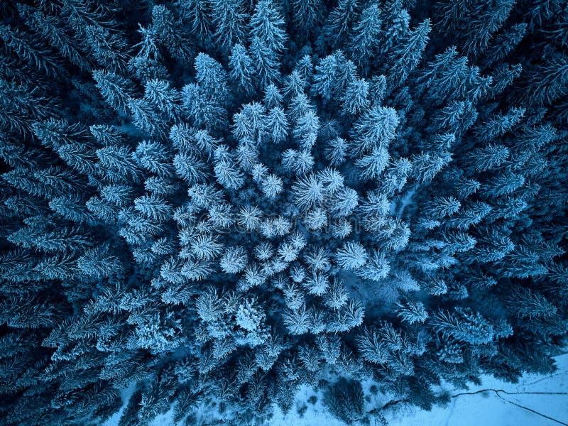 鸟瞰图从上面在雪盖的冬天森林 松树和云杉的森林顶视图 冷的多雪的原野 免版税库存照片