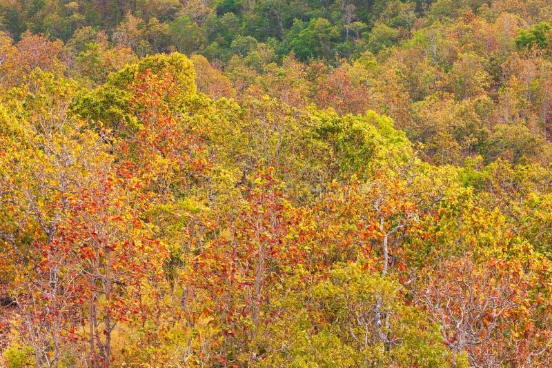鸟瞰图,五颜六色的热带森林在冬天,叶子的美好的颜色从绿色的到红色正是季节的变动 风景风景 免版税库存图片