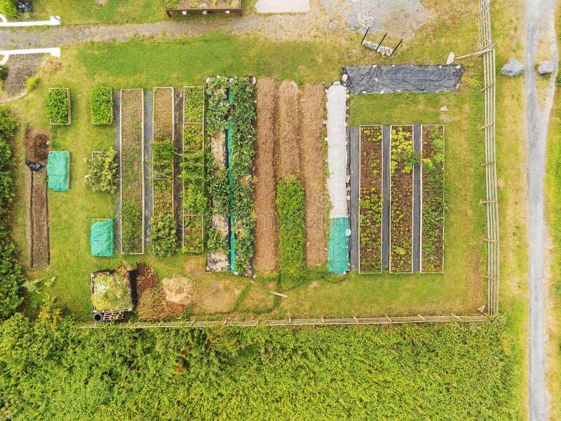 鸟瞰图,菜床在一种庭院,新鲜和有机产物 种田和食物生产 收获自然 免版税库存照片