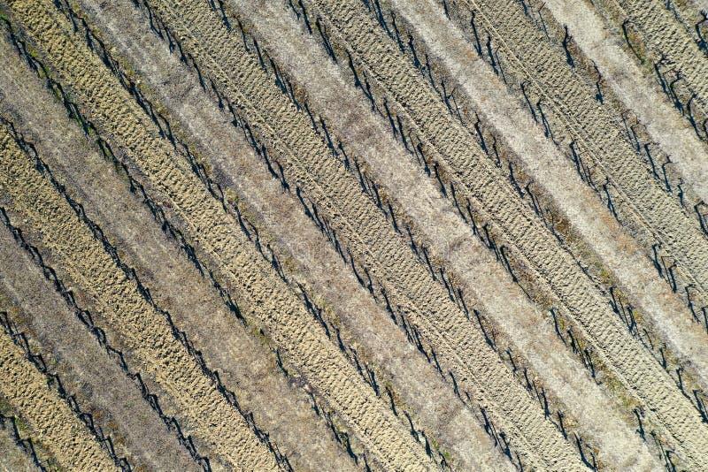鸟瞰图,葡萄园在冬天 免版税图库摄影