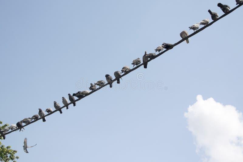 鸟等待 免版税库存图片
