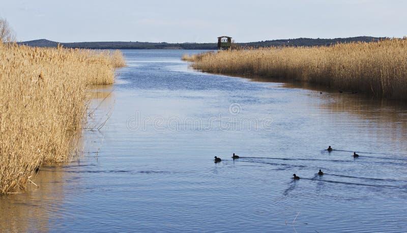 鸟类学储备 Vransko jezero 克罗地亚 库存图片
