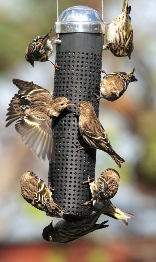 鸟繁忙的馈电线 免版税库存图片