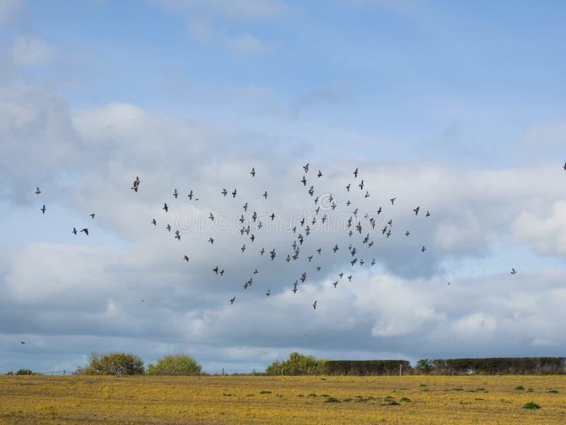 鸟群反对多云天空的 图库摄影