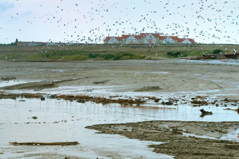 鸟群在污染的区域,自然的人的污染 库存照片