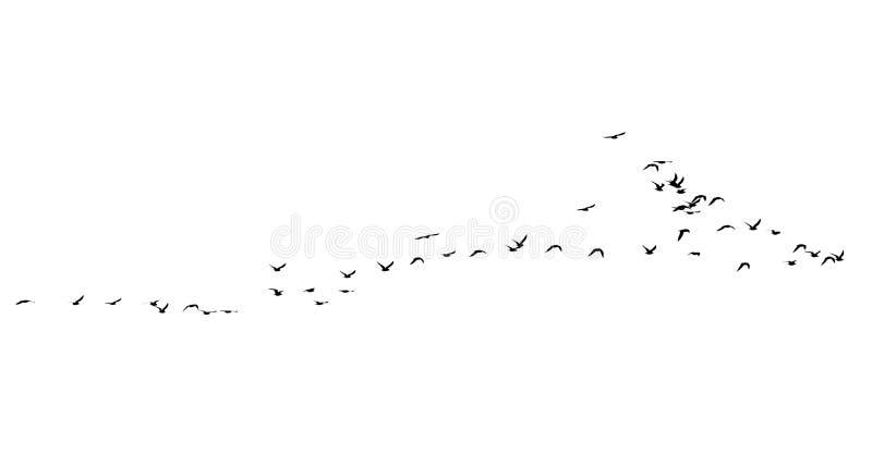 鸟群在白色背景的 库存照片