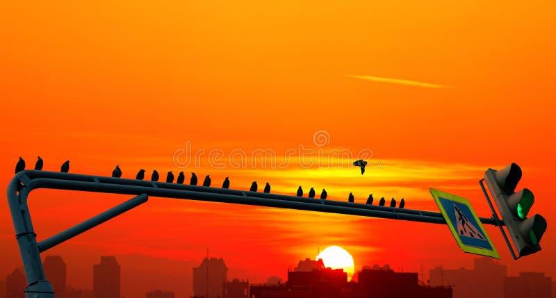 鸟群黑剪影坐在剧烈的都市日落背景的绿色路灯到底  库存图片