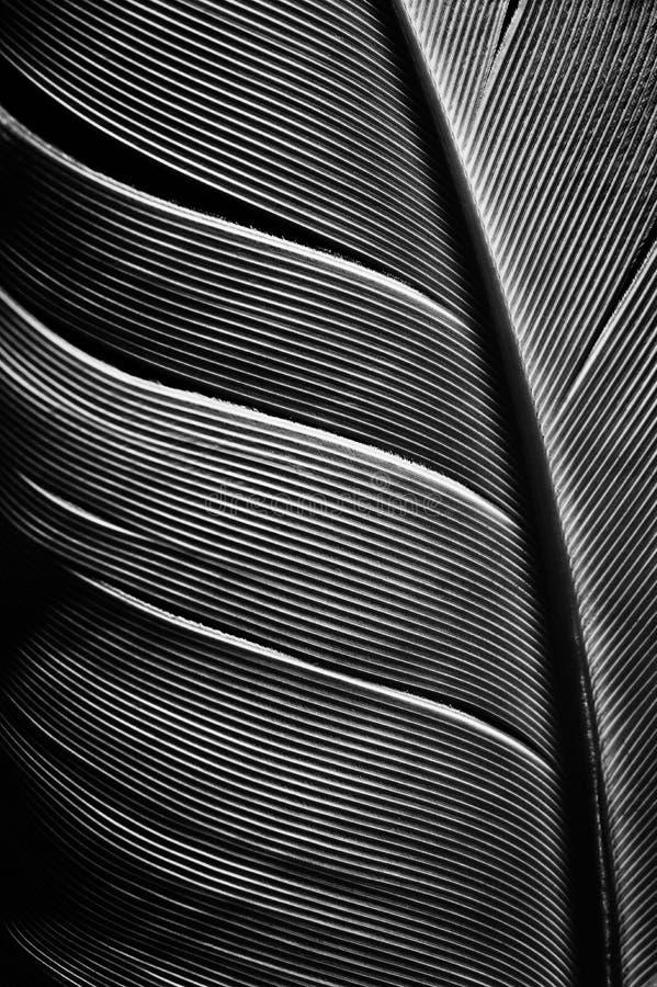 鸟羽毛片断的黑白图象  库存图片