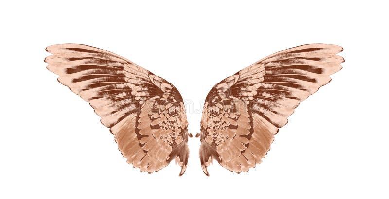 鸟翼在白色背景的 库存图片