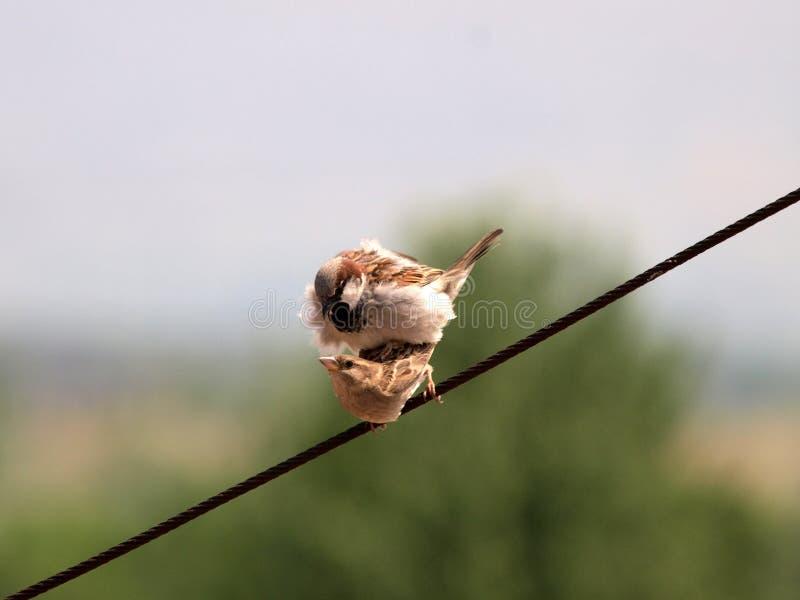 鸟联接 免版税库存照片