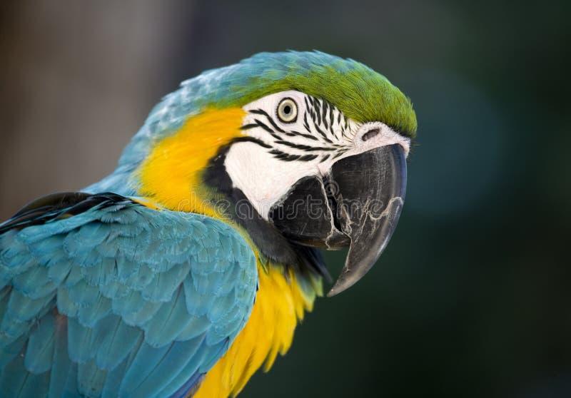 鸟联系 免版税库存图片