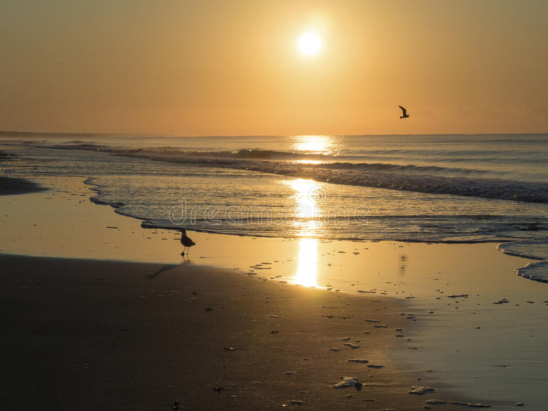 鸟腾飞在海洋在日出 库存图片