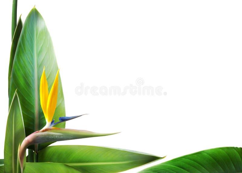 鸟花卉框架天堂 免版税库存图片