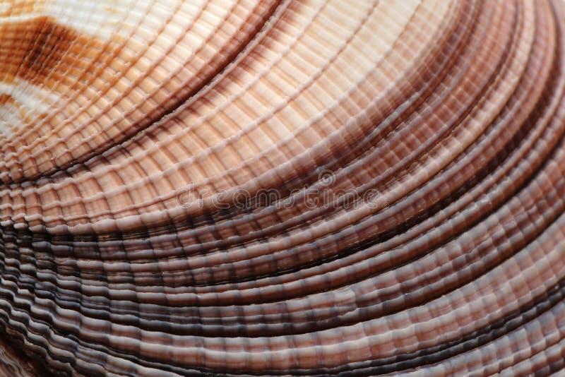 鸟蛤壳 图库摄影
