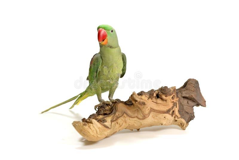 鸟被栖息的木头 图库摄影