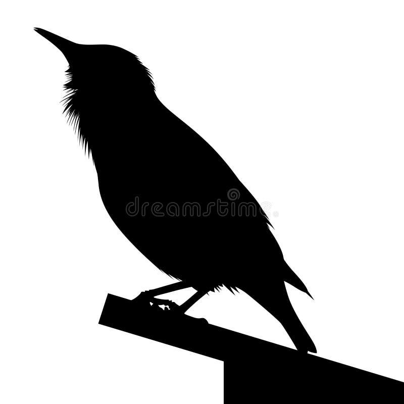 鸟详细的剪影  向量例证