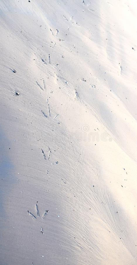 鸟足迹在沙滩的-抽象背景和纹理 库存照片