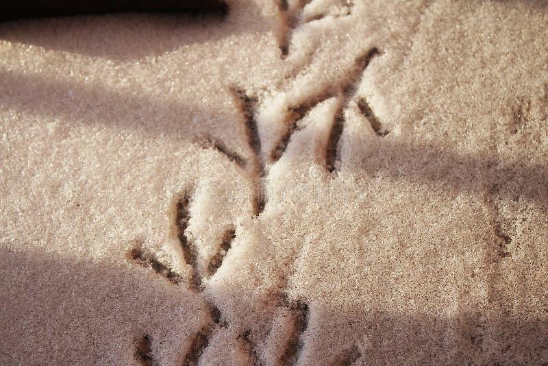 鸟踪影在雪的 免版税库存图片