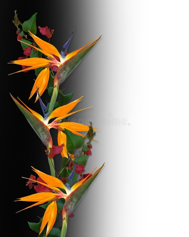 鸟边界开花热带的天堂 免版税图库摄影