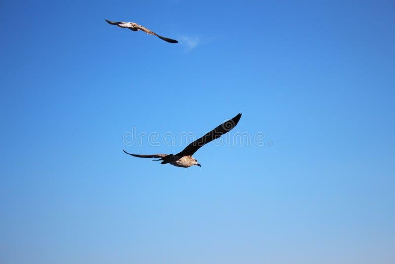 鸟释放在天空的飞行 免版税图库摄影