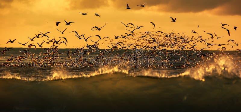 鸟野生生物  免版税库存图片