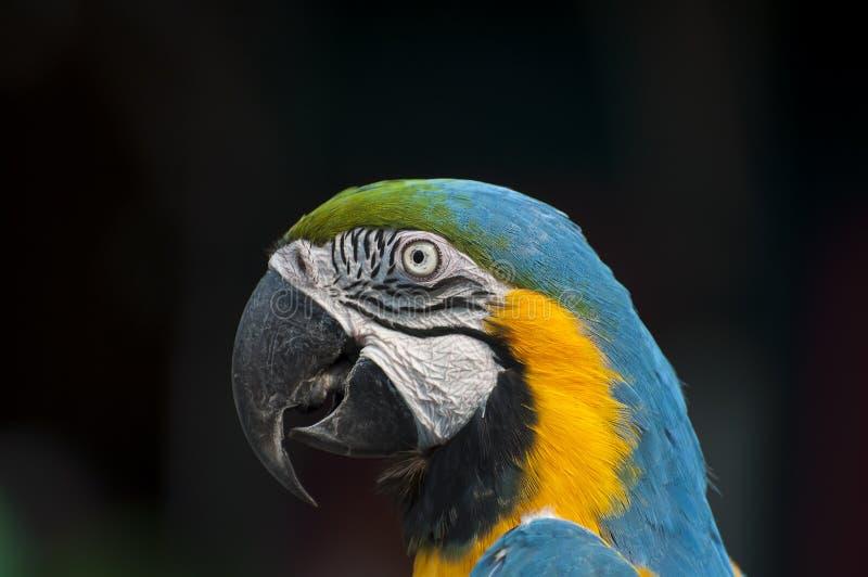 鸟顶头射击 免版税库存照片