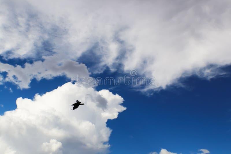 鸟飞行剪影背景在白色云彩前面的在风雨如磐的蓝天 免版税库存照片