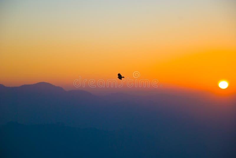 鸟飞行日出 免版税库存照片