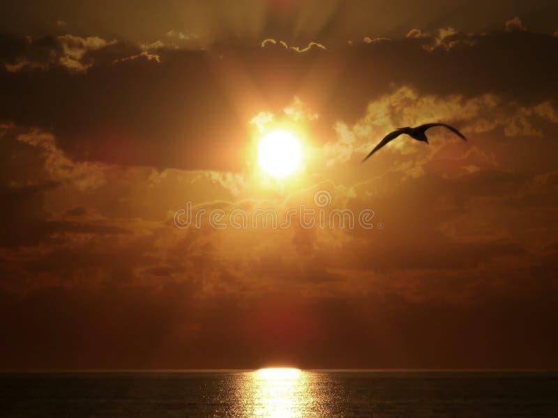 鸟飞行海运日落 库存图片