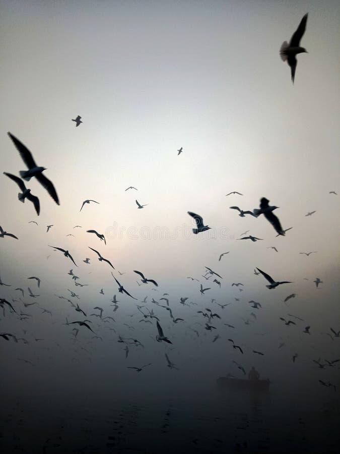 鸟飞行 免版税库存照片