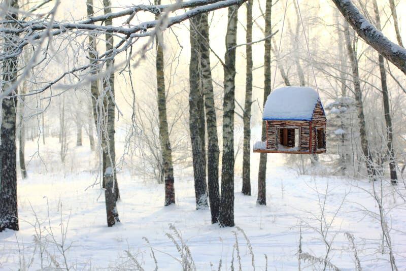 鸟饲养者在冬天森林里 免版税图库摄影